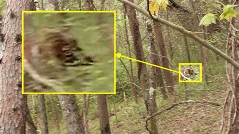The Bigfoot Field Journal: Back Trail Footage Bigfoot Sketches