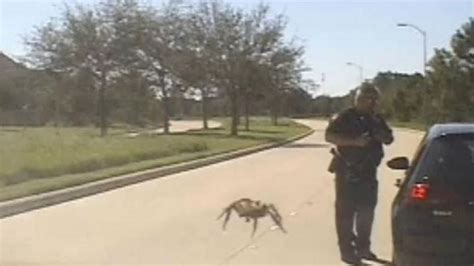 'Giant' Spider Seen Stalking Texas Cop in Viral Video