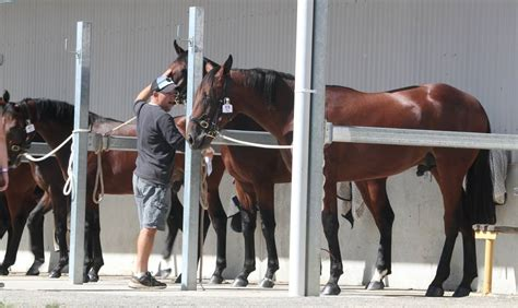 Bathurst Gold Crown Yearling Sales numbers down but