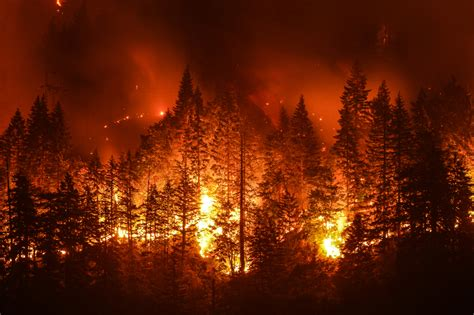 New Research Confirms Role of Climate Change in Forest