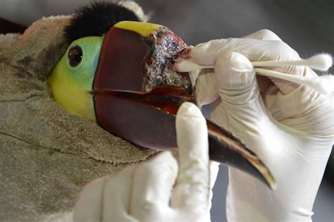 Outrage Over Attack on Costa Rican Toucan Will Lead to a