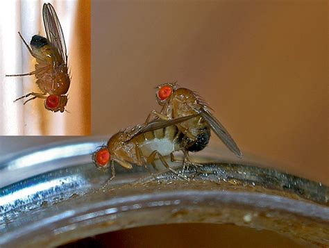 Fruit Fly Experiment: Conclusion