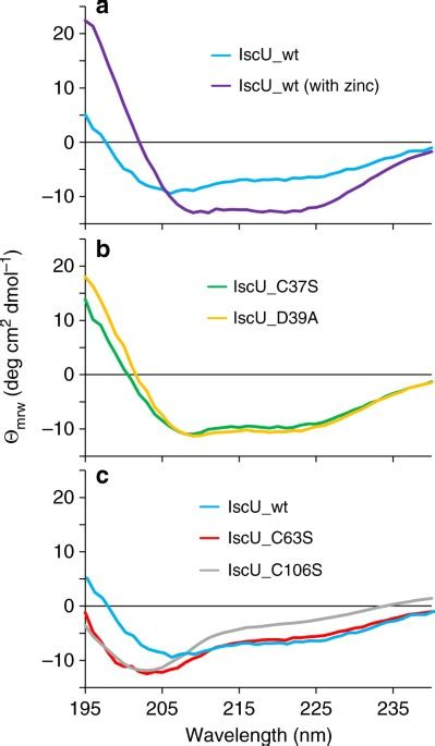 The cold denaturation of IscU highlights structure