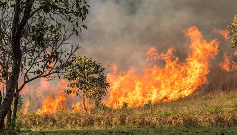 Australian Wildfires to Burn for Many More Months - Local