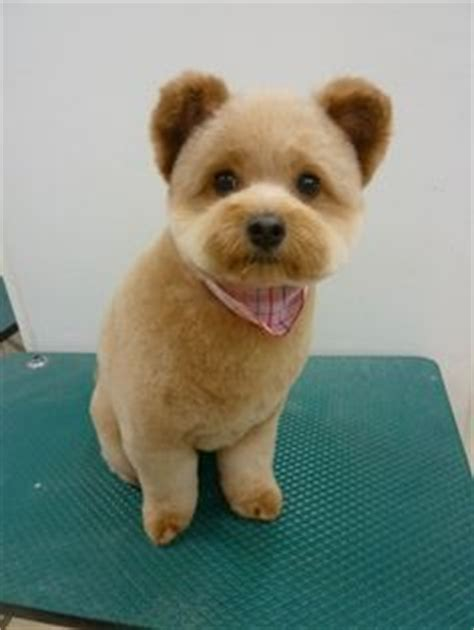 28 Best Dog grooming by Kristen images | Dog grooming